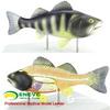 ENOVO颐诺鱼解剖模型 水产养殖专业科学教学实验模型生物动物模型