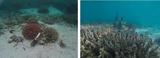 水下溶解氧、pH、温度多参数在线监测系统