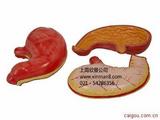胃模型,胃解剖模型