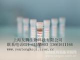 小鼠抗利尿激素/血管加压素/精氨酸加压素(ADH/VP/AVP)ELISA Kit