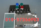 人硫化氢含量检测,H2S ELISA测定试剂盒