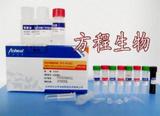 大鼠CTX-Ⅱ ELISA检测试剂盒