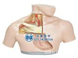 中心静脉置管术训练模型