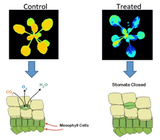 WIC红外热成像技术方案(植物科学)