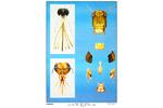 昆虫口器教学挂图