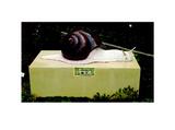 软体动物(蜗牛)
