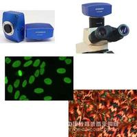 上海翰途 HT1600CN 1600万像素彩色高分辨率科学相机