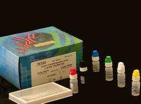 人热休克因子1(HSF-1)试剂盒