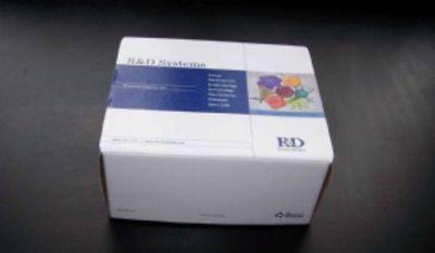 豚鼠单核细胞趋化蛋白4(MCP-4/CCL13)ELISA试剂盒