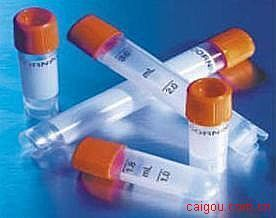 平滑肌特异性抗原(SMTN)抗体