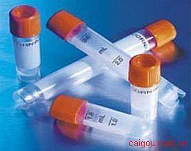 6-磷酸甘露糖受体(M6PR)抗体