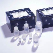 人间变性淋巴瘤激酶(ALK)ELISA试剂盒说明书,厂家