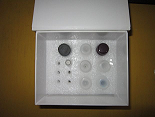 游离雌三醇ELISA试剂盒厂家代测,进口人(FE3)ELISA Kit说明书