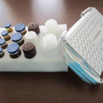 人β内酰胺酶(β-lactamase)ELISA试剂盒