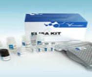 大鼠CXC趋化因子受体4(CXCR4)ELISA Kit