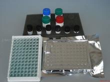 人血栓素A2(TX-A2)ELISA试剂盒