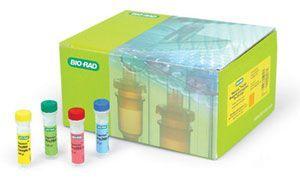 小鼠I型胶原(Collagen Type I) ELISA试剂盒