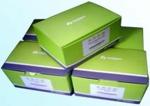 NRBC Blood DNA Kit 从全血样品(包括红细胞带核的)提取总基因组DNA,特别鸟类和鱼类血液