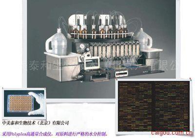 中美泰和-引物合成-1.3/bp