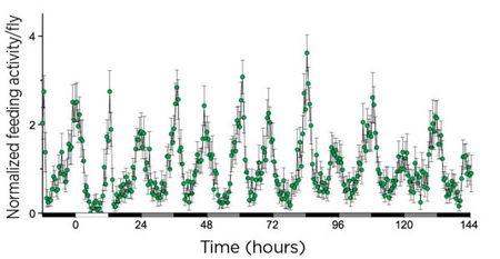 FLIC高通量果蝇取食行为监测系统