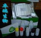 人免疫球蛋白G Fc段受体Ⅰ(FcγRⅠ/CD64)Elisa试剂盒