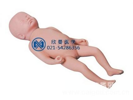 足月胎儿模型