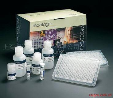人可溶性髓系细胞触发受体-1 ELISA试剂盒