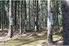 秋树却逢暖——树木生理生态系统中秋上线