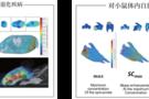 新品推荐 | 3D小动物活体成像系统ERI TM 600