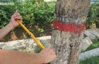 树木生长锥的使用方法及其保养