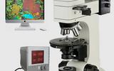 热台偏光显微镜WMP-6508