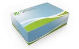 老鼠源性核酸检测试剂盒(冻干型、PCR-荧光探针法)