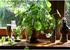 室内绿植可以提高氧气水平吗