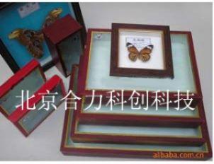 昆虫标本盒