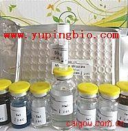 犬基质金属蛋白酶-9(MMP-9)ELISA试剂盒