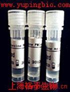 APG4B细胞自噬相关抗体