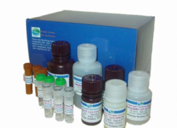 兔子纤溶酶原激活物抑制因子(PAI)ELISA试剂盒