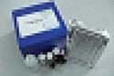 待测大鼠基质金属蛋白酶7(MMP-7)ELISA试剂盒价格