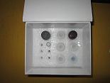 横纹肌辅肌动蛋白α ELISA试剂盒厂家代测,进口人(sm Actinin-α )ELISA Kit说明书