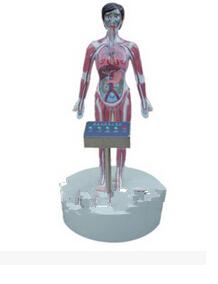 微電腦吸毒血液演示模型 wi114509