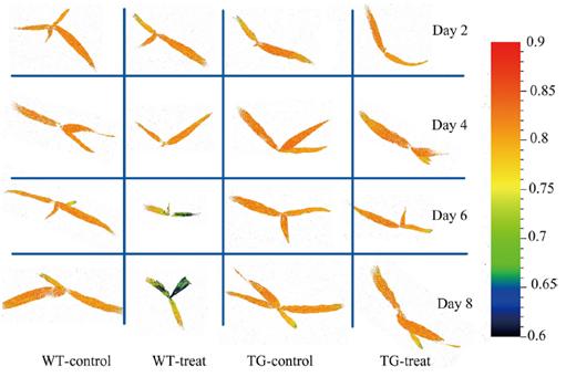 植物育種表型篩選技術方案