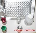 大鼠免疫球蛋白G(Rat IgG)ELISA kit